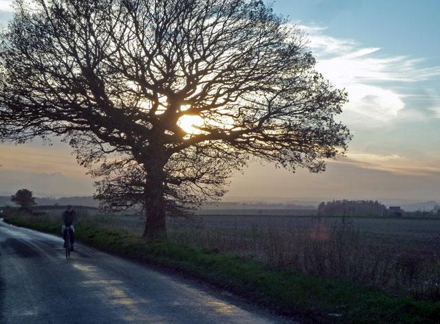 lonely-cyclist-tree-sun-dark