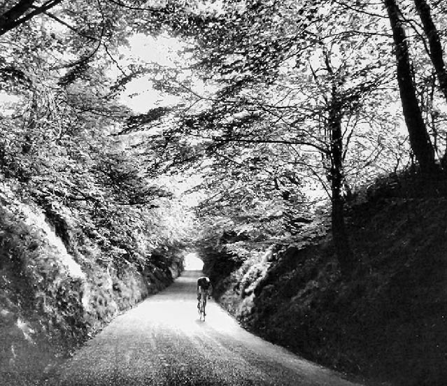 wooded-road