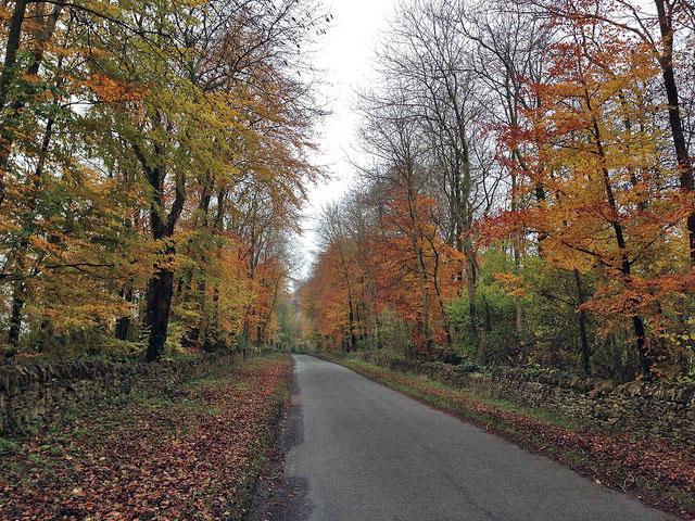 autumn-near-