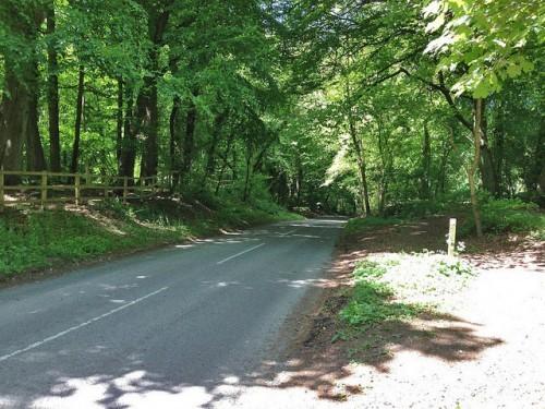 white-leaf-hill