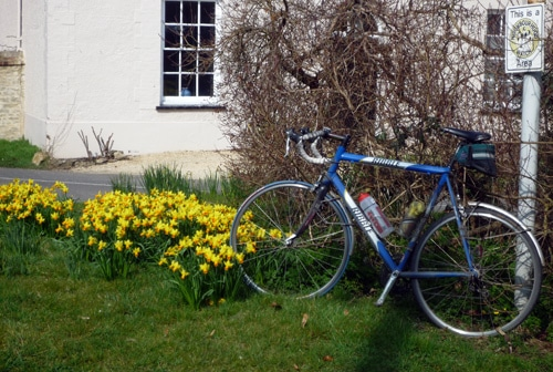 daffodils-winter-bike