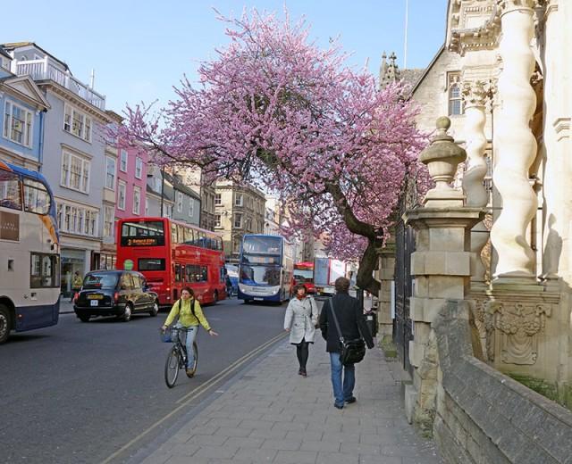 enjoy-blossom