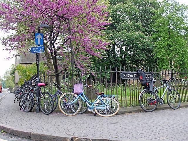 nice-bike-under-tree