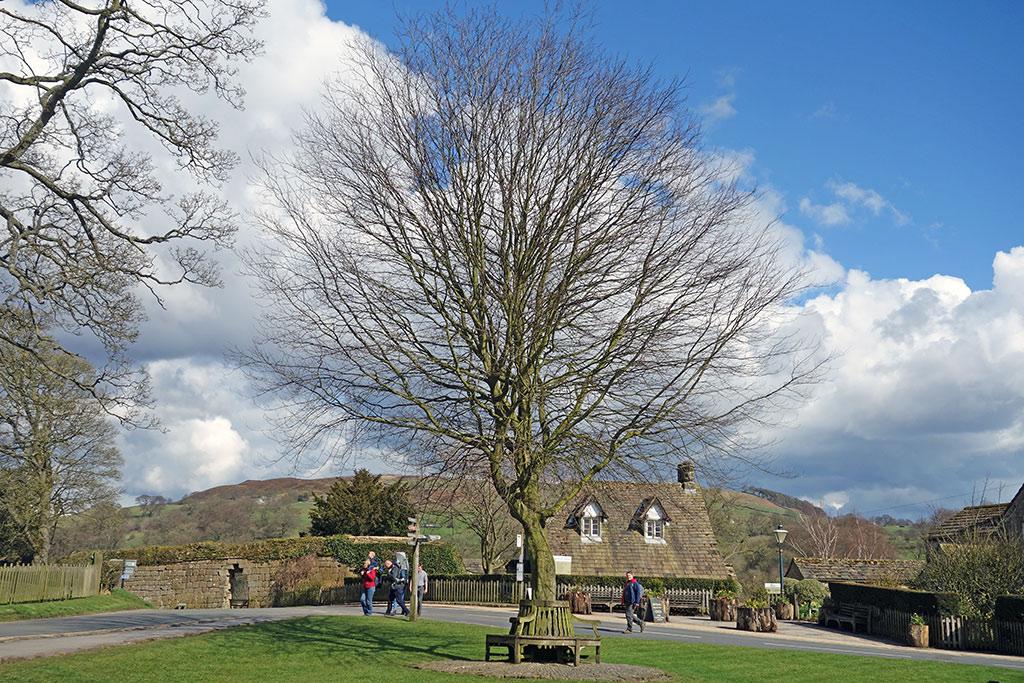 bolton-abbey-tree