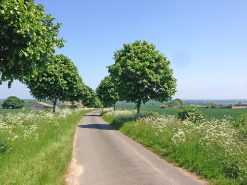trees-cotswolds