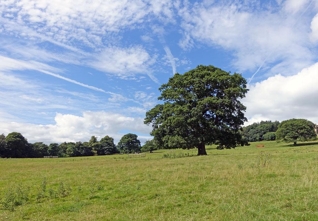 tree-field-sky-clouds