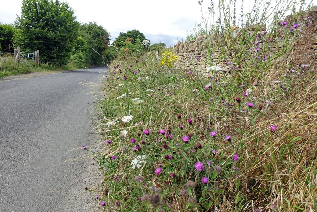 wild-flowers-road