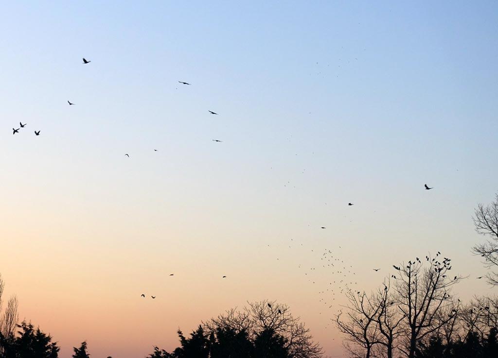 birds-dusk-botley-1024