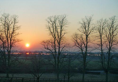setting-sun-trees-botley-1024