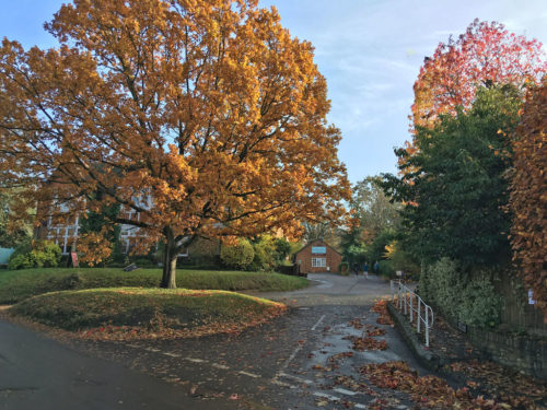 tree-lane-autumn